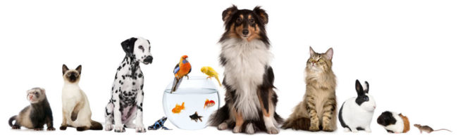 Critter Sitters of Barrington Pets