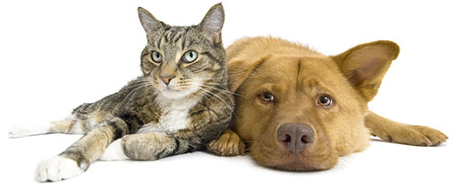 Critter Sitters Cats & Dogs