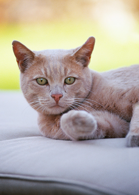 Cat Sitting by Critter Sitters LTD
