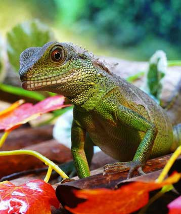 Exotic Pet Care by Critter Sitters LTD